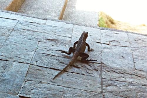 run lizard run