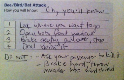 bee/bird/bat attack