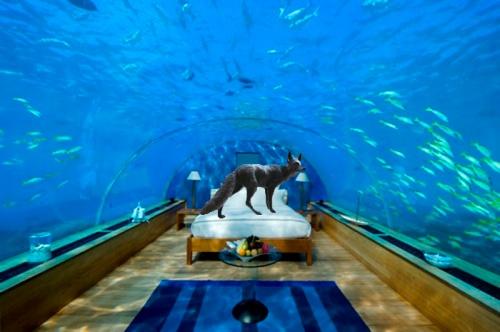 underwater hotel fox